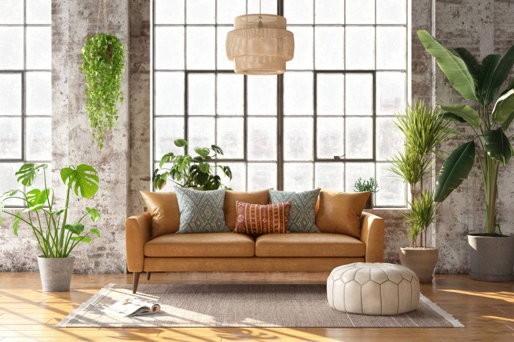 Indoor Plant with Big Leaves to Decor Your Space