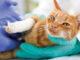 pet pain management