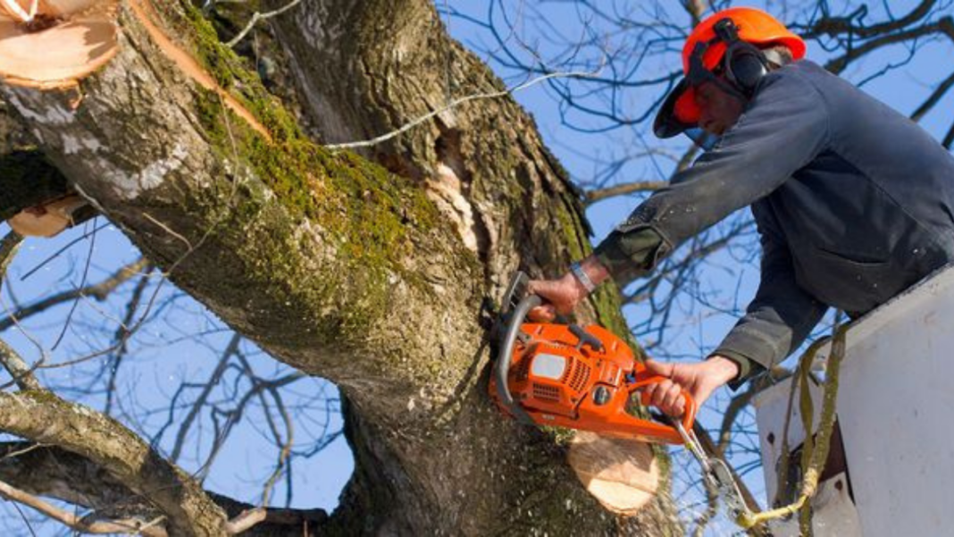 Maintaining the Beauty of Your Old Trees With Professional Assistance