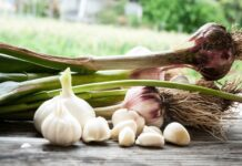 garlic importer
