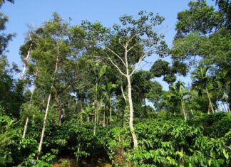 Foods and Herbs That Grow Natural in The Rainforest