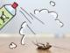 Indoor Pest Control