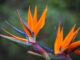 10 Tropical and Exotic flowers perfect for every occasion