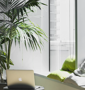 5 Ultimate Benefits of having plants within your office