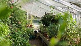 Maintaining a Thriving Greenhouse Throughout the Winter MonthsMaintaining a Thriving Greenhouse Throughout the Winter Months